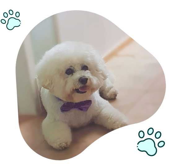 Paw Perfect Mobile Pet Grooming Service In London